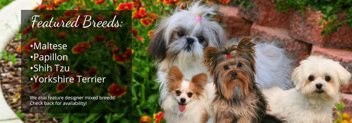 Small & Toy Puppy Breeder in Nebraska | Sandhills Puppy Paws